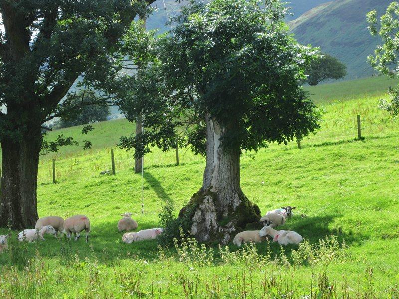Warm days of summer .. Ullock ... near Braithwaite Village