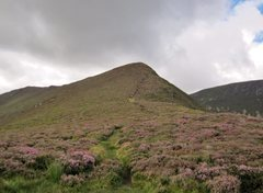 Rock Climbing Photo: The descent from the ridge through thick purple he...