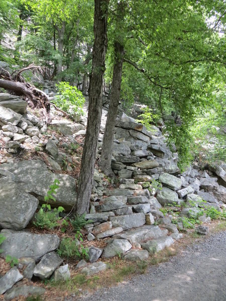 Rock Climbing Photo: High E approach trail.  The next trail is Ant'...