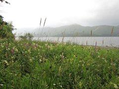 Rock Climbing Photo: Lake side Wildflowers