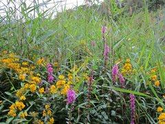 Rock Climbing Photo: Lakeland Wild Flowers