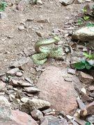 Rock Climbing Photo: Ssssstay away!