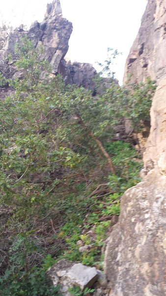 Rock Climbing Photo: The approach to P-Diddy. Schwack through the brush...