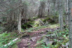 Rock Climbing Photo: Trail takes a right turn here and the bushwack sta...