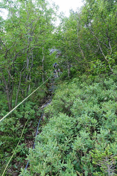 Fourth rappel used to go through the trees. Rap tree is no longer around since Aug 19, 2016. See note on route desccription.