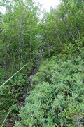 Rock Climbing Photo: Fourth rappel used to go through the trees. Rap tr...