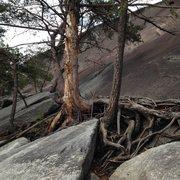 Rock Climbing Photo: Tree ledge from slightly right of center.