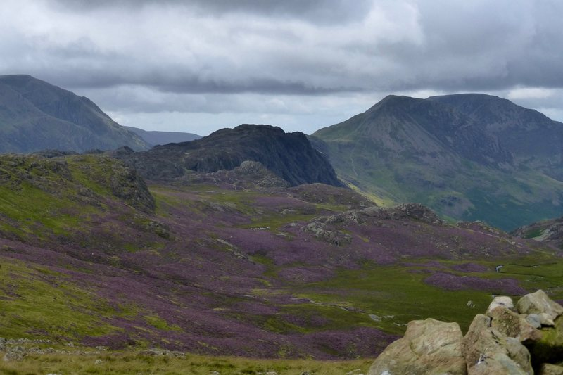Haystacks and Pillar Mountain and High Stile. . Heather in full bloom
