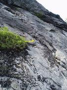 Rock Climbing Photo: Alternate dbl bolt station for Rappel #4