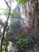 Rock Climbing Photo: Jessica 5.11 a classic on black tufa...