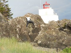 Rock Climbing Photo: Bouldering with the Amphitrite Lighthouse in the b...