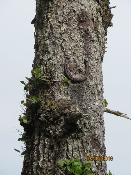 Rock Climbing Photo: A good omen in Ucluelet.