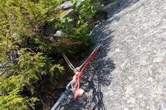 Rock Climbing Photo: Daniel Webster Highway: Bolt/tree anchor on top of...