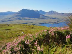Rock Climbing Photo: Heather in full bloom on Stac Pollaidh