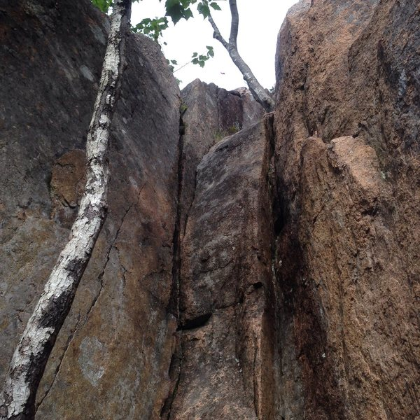 Rock Climbing Photo: The two birch tree in the notch of the first pitch...