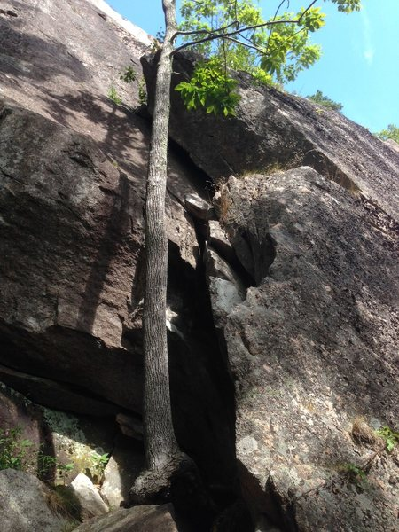 The first pitch of Sea Gypsy, as seen from below. Start on the left side of the buttress, just left of the obvious Chitlan&@POUND@39@SEMICOLON@s Corner. It gets busy up there.
