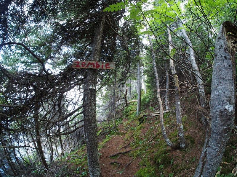 Rock Climbing Photo: Zombie wall path