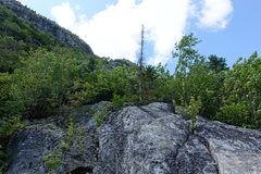 Rock Climbing Photo: Top of P1. The old questionable pine tree with the...