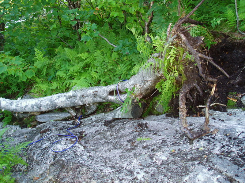 """The """"Once Upon-a-Time"""" Rap Tree below the large OH!  It fell over 8/19/16 when I used its rounded trunk as a seat, well below the level of the slings. Probably less than 50 lbs force."""