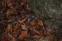 Rock Climbing Photo: Flying squirrel