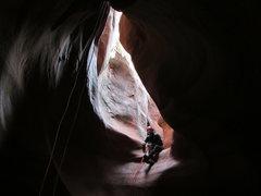 Rock Climbing Photo:  Ringtail