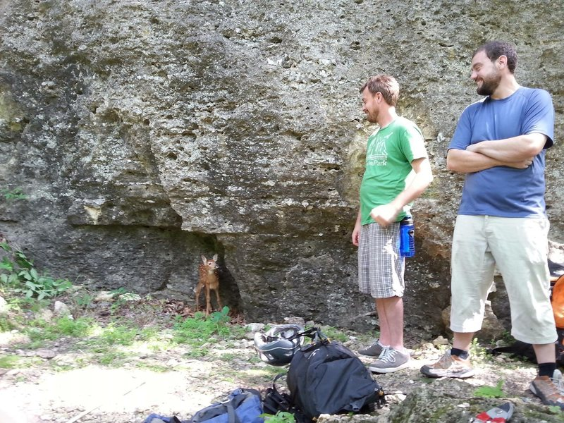 Crag fawn
