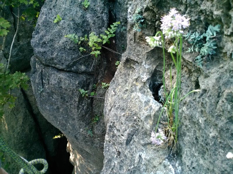 Rock Climbing Photo: Sometimes beautiful things bloom despite a inhospi...