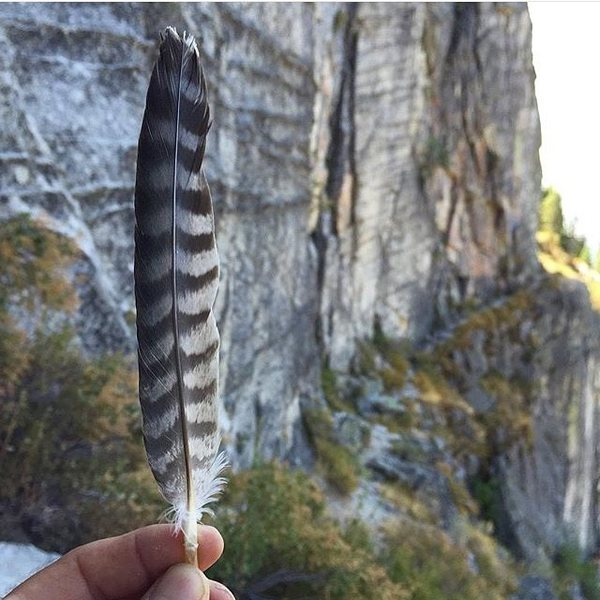 Rock Climbing Photo: Peregrine falcon feather at the main ledge