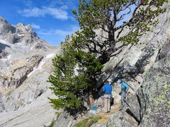 Rock Climbing Photo: The tree at the base of the route. If coming from ...