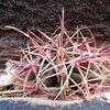 Cactus Symmetry