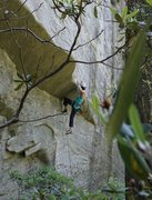 Rock Climbing Photo: Erica setting up for the roof crux