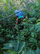 Rock Climbing Photo: The approach through the alder tunnel. A typical A...