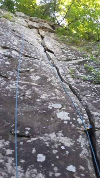 Rock Climbing Photo: Tree Beard