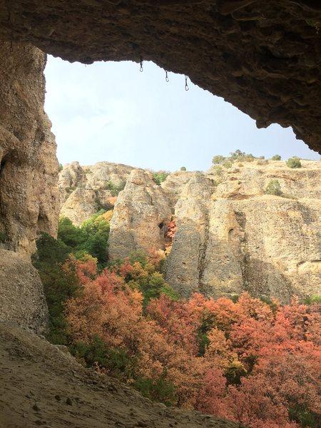 Rock Climbing Photo: Maples!