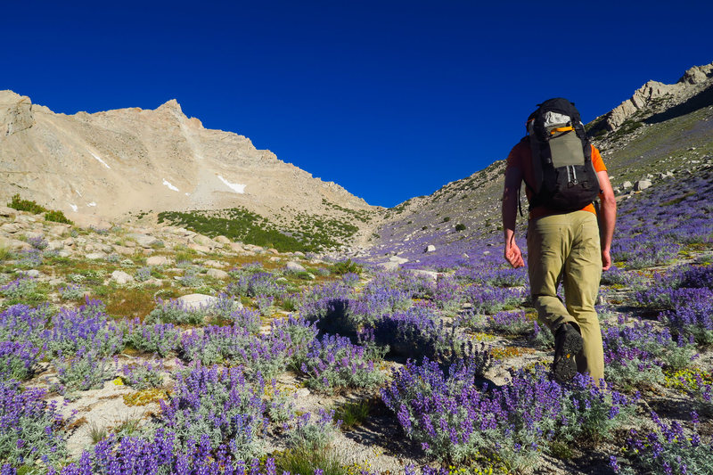 Approaching Humphreys in a sea of purple