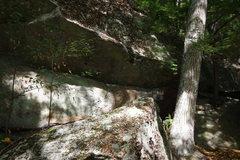 Rock Climbing Photo: Goldfinch