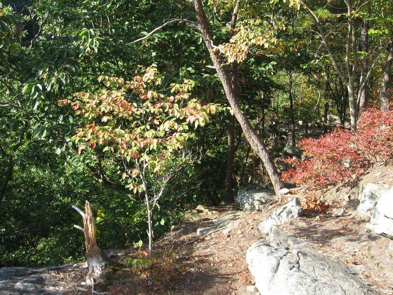 Rock Climbing Photo: path along the top of the crag.