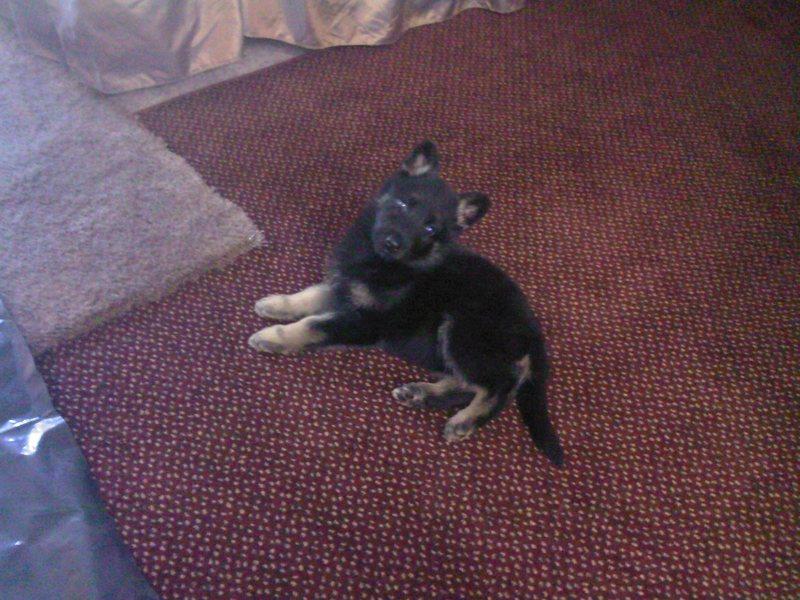 Baby Puppy Dog