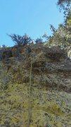 lichen... such beautiful sketchiness <br />