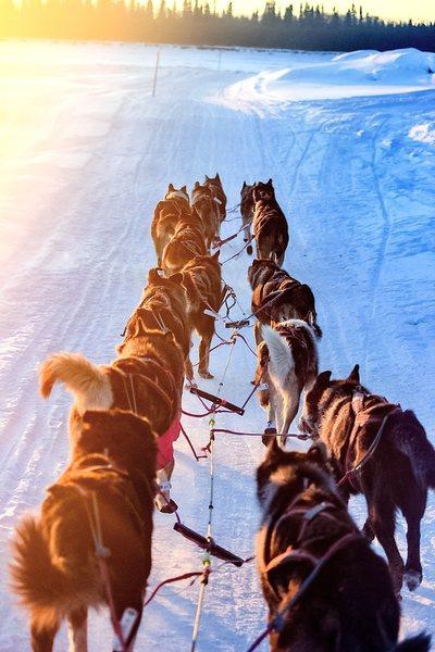 On the Iditarod Trail