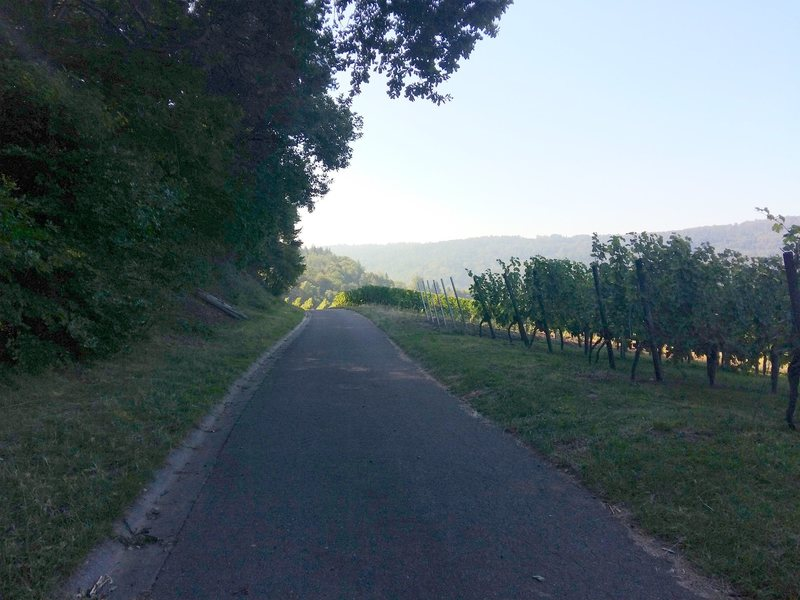 beginning of the approach hike on asphalted road by the vineyards
