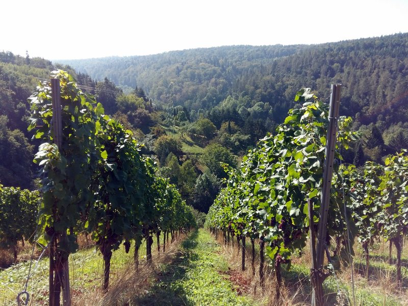 The vineyards right near one of the klettergarten entrances