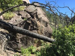 Rock Climbing Photo: Unfortunately a big, burnt ponderosa has fallen ri...