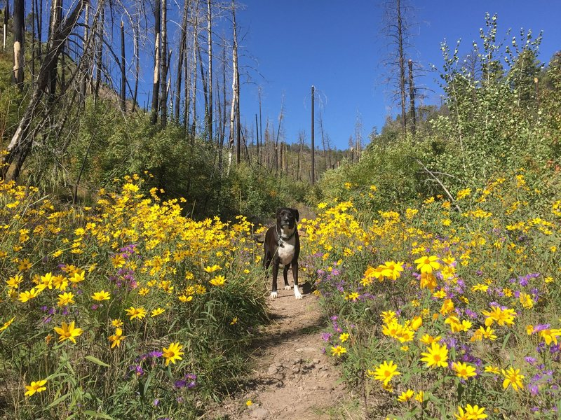 Happy dog in the wildflowers