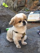 Rock Climbing Photo: Best crag dog