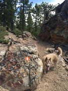 Rock Climbing Photo: You'll find this boulder and trail marker imme...