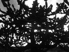 Rock Climbing Photo: Summit cactus
