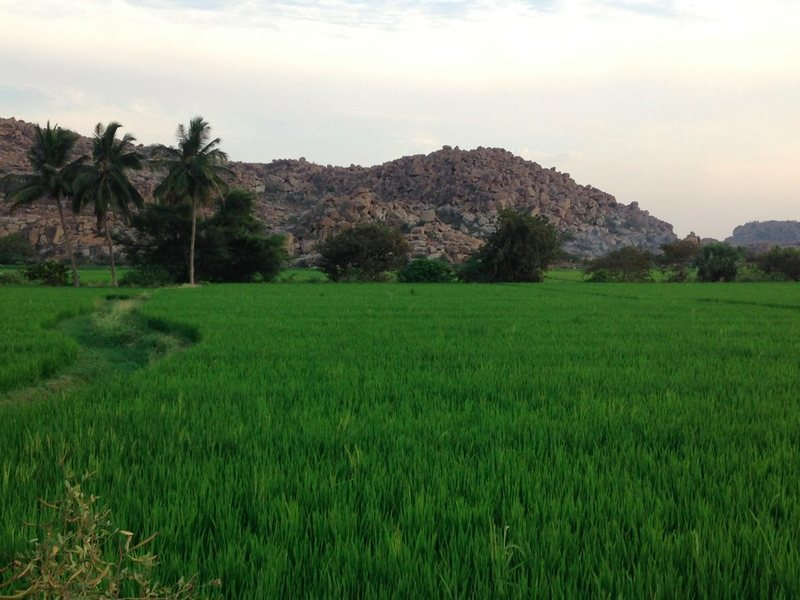 Fields and boulder fields