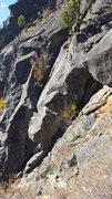 Rock Climbing Photo: Little tree