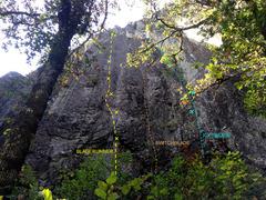 Rock Climbing Photo: Bladerunner